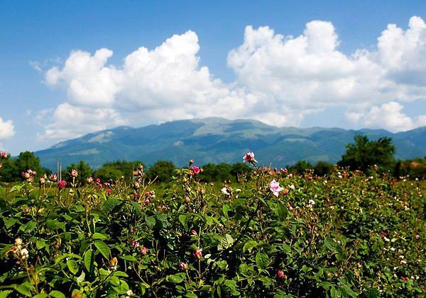Poilsis Bulgarijoje rugpjūtį